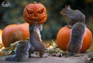 ardilla en halloween