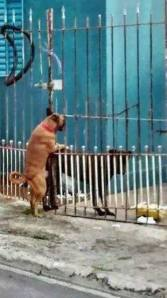 cuando hay amor no existen la barreras