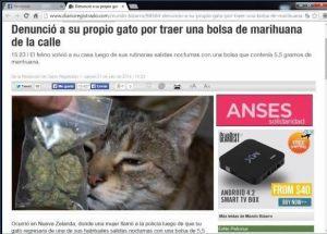 gato marihuanero