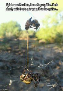 muerte mutua araña y abeja